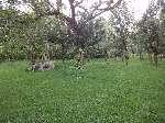 Vendo Terreno  Altos de Las Huertas  - thumb - 1154