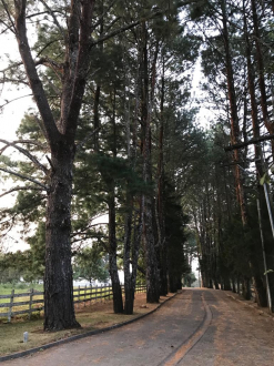 Terreno en Santa Elena del Lago - thumb - 108461