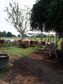 Preciosa Finca en el Área de Chiquimulilla - thumb - 129124