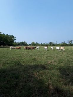 Preciosa Finca en el Área de Chiquimulilla - thumb - 129125